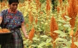 Female farmers encounter gender discrimination in Guatemala